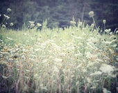 Landscape Photography - Shabby Chic Art - Field Photograph - Green, mint - Queen Anne's Lace - Black Eyed Susan - Bedroom Decor - .
