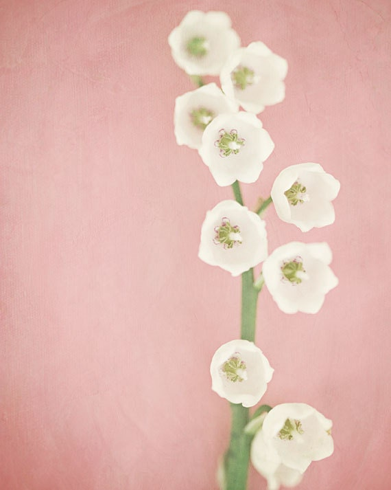 Soft Pink Decor, Pink Flower Print or Canvas Wrap, White Lily of the Valley, Nursery Decor, Pastel Pink Art, Minimalist Decor.