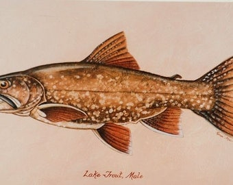 """5""""x7"""" matted print of a Lake Trout"""