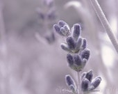 Lavender Floral Photography Purple,flower,Gifts under 25,silver,blossoms,bloom,soft lilac,baby's nursery decor,delicate floral print,soft