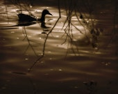 Duck Pond Photography swimming,Gifts under 25,evening,glowing,moonlight,glorious,magical,fairytale,luminous,sepia,dramatic,surreal print