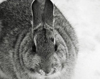 Bunny Rabbit Photography grey,monochrome,Gifts under 25,black & white,winter,adorable,snow,nursery decor,frosty whiskers,bunny in winter