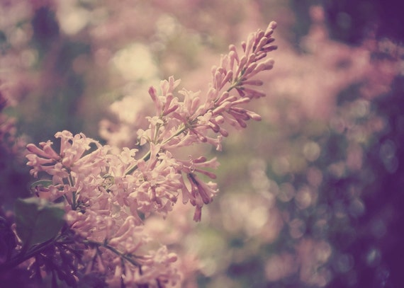 Lilac Floral Photography Flower,pink,lavender,baby nursery art,spring,lilacs,shabby chic,bokeh,gifts under 25,soft dreamy artwork,delicate