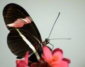 Butterfly--8x10 fine art photograph