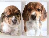 Beagle Puppies --set of 5 blank greeting cards
