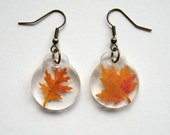 Autumn Earrings - Charmed Real Autumn Leaf Earrings