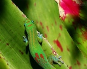 Day Gecko Camouflage: 12x18 fine art print - 15% donated to the OccupyWallStreet protest