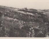 The Moors along the North Shore, Nantucket post card. Gardiner, black & white.