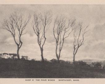 Harp O' the Four Winds, Nantucket post card. Gardiner, black & white.