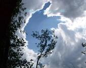 Fine Art Photograph - Nature photography - wall decor - 8 x 10 print - Sky Swallowing Tree
