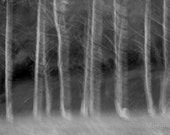 """Large 20"""" x 10"""" Black and White Print, Trees, Stillness in Motion, Ready to Frame, Nature, Fine Art Photography by Glennis Siverson"""