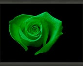"""Professionally Framed 8.75"""" x 6.50"""" Heart-Shaped Green Rose, Fine Art Floral Photography by Glennis Siverson"""