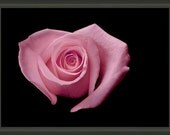 """Professionally Framed 8.75"""" x 6.50"""" Heart Shaped Pink Rose, Valentine Gifts, Fine Art Floral Photography by Glennis Siverson"""