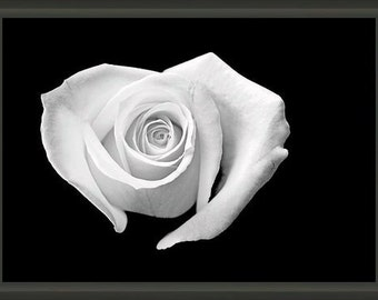 "Professionally Framed 8.75"" x 6.50"" Heart Shaped White Rose, Fine Art Photography by Glennis Siverson"