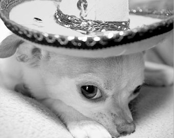 "8"" x 8"" Roxie the Chihuahua in Sombrero Hat, Humorous, Fine Art Pet Photography by Glennis Siverson"