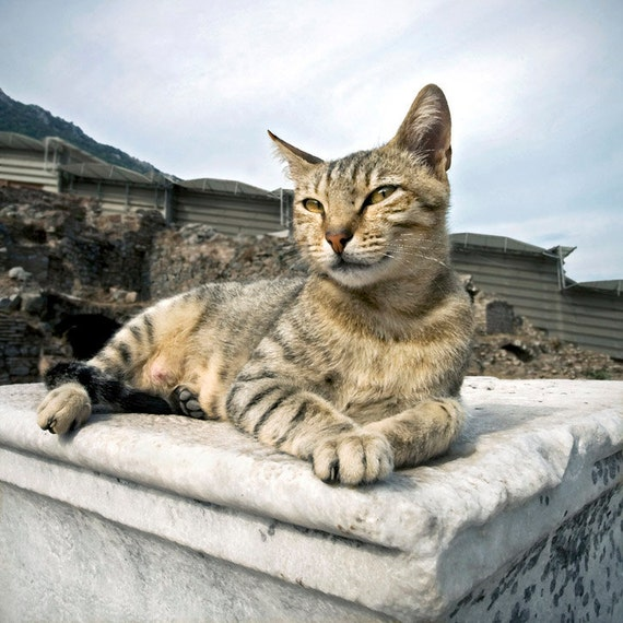 "Items similar to 5"" x 5"" Tabby Cat, Goddess Queen of ..."