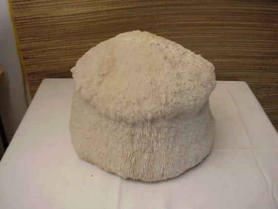 Very Rare LARGE Phallic Penis Mushroom Shape CORAL Shell Ocean ART Treasure