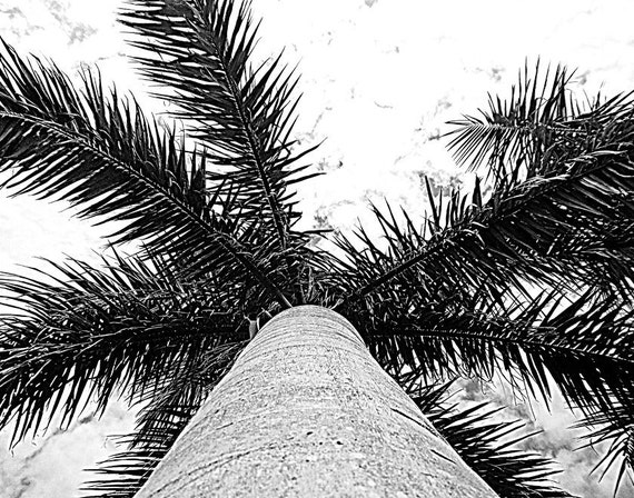 Black And White Photography Palm Trees Black And White Photography