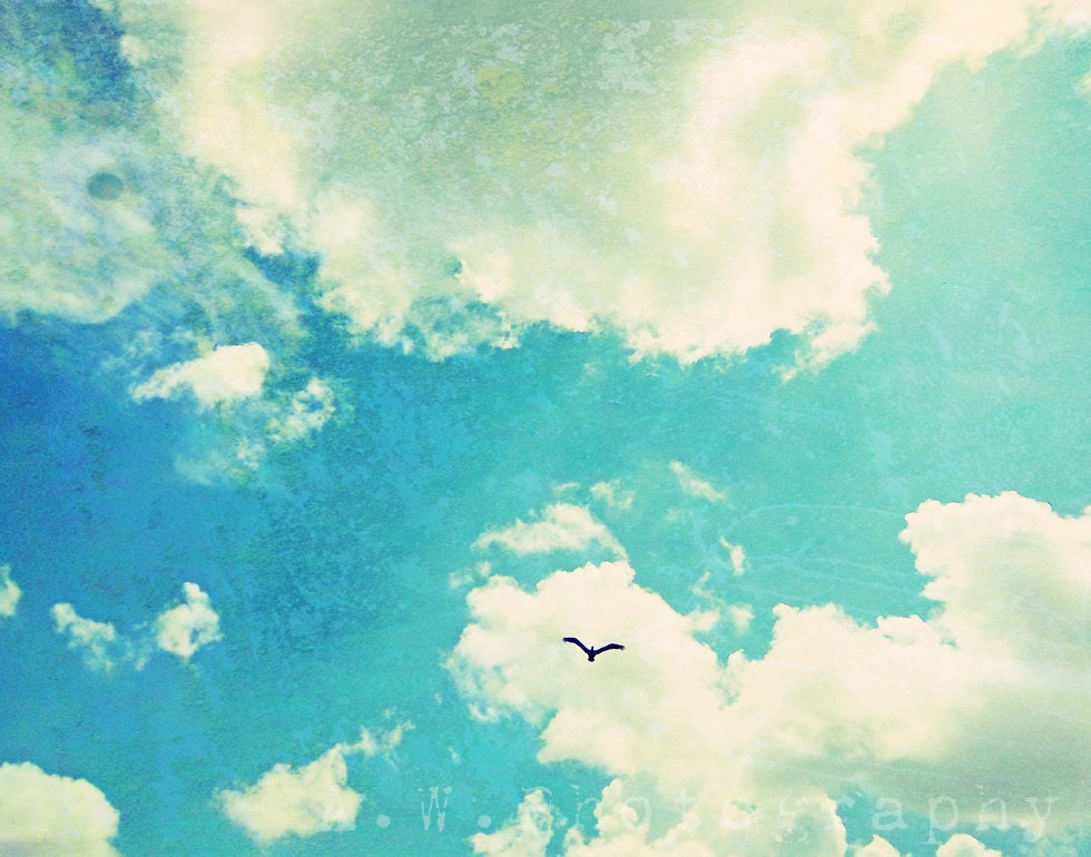 Fly 11x14 Photography Graphic Design Mixed Media By