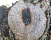 Alphabet Letter O Photograph Digital Tree Instant Download 5 Photographs