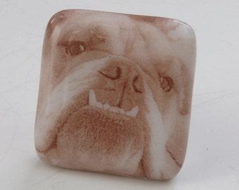English bulldog  knob - Fused glass