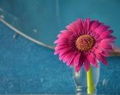 "Summer's Bloom - Photograph 7""x5"""