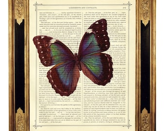 Butterfly Morpho Insect - Vintage Victorian Book Page Art Print Steampunk