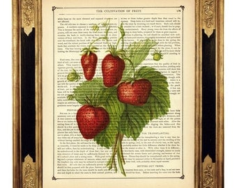 Strawberry Botany Fruit - Vintage Victorian Book Page Art Print Steampunk