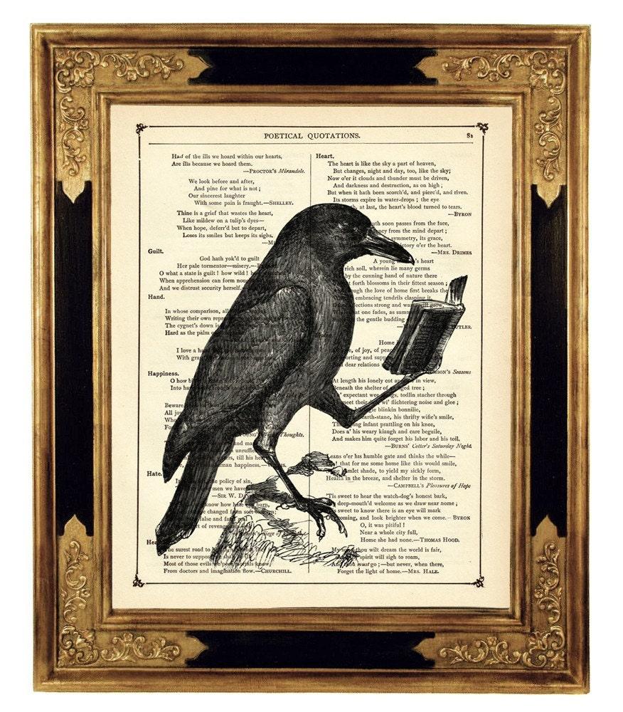 Halloween Raven Crow Reading Book Animal Natural History