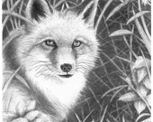 Fox - Note Card Package