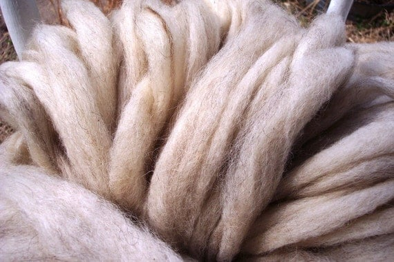 creamy white with gray icelandic wool roving 1 lb.