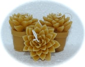 Beeswax Cactus Candles - Succulent Aloe Set of 3