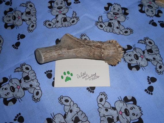 Large Deer Antler Dog Chew (Lot 641)