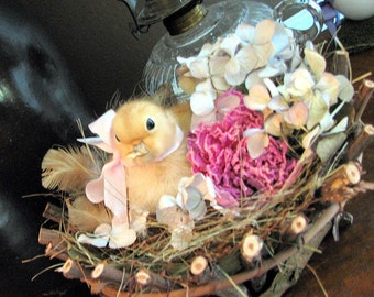 Vintage Real, Perserved,  Baby Duck In Nest with Dried Hydrangea and Peony
