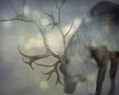 Christmas Photo of Reindeer / Deer - If on a Winter's NIght - Snow and Reindeer - Christmas photography - 8x10