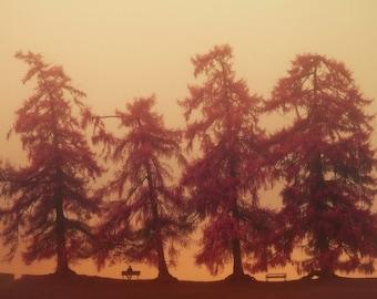 Tree photography, nature photography, large art print, large photography - An English Autumn