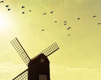 In the Wind - Fine Art Photography Print, Nature print, bird print