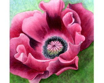 Pink Oriental Poppy, watercolor painting