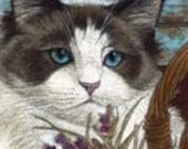 Ragdoll Cat Signed Giclee  Print