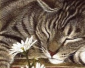 Tabby Cat Signed Giclee  Print