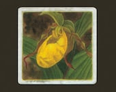 Yellow Lady's Slipper Matted/Signed Giclee  Print