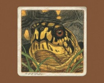 Eastern Box Turtle Matted/Signed Giclee  Print