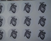 Anatomical Heart Round (24, 60 or 100) White Stickers - Labels - Seals - science