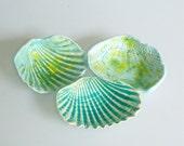 seashell collection ocean green