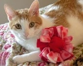 Catnip Filled Valentine Cat Toy (100% to Feral Cats TNR)