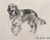 Clip Art Designs Transfer Digital File Vintage Download DIY Scrapbook Shabby Chic Pillow Black Golden Retriever Dog Pet No. 0293