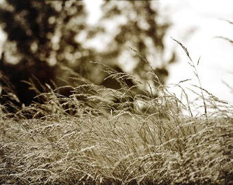 Wind in the Tall Grass 13x19 fine art photograpy print