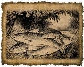 Vintage,  Fish, Altered, Printable, Iron On, Ephemera,  Digital Image No. 320