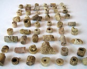 Crinoid Fossils, 55 Stem Pieces, Sea Lillies, Natural Finds, Nature Beads, Fairy Money, Terrarium, Aquarium