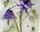 Columbine Watercolor Painting Original Botanical Art